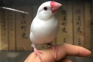 研究室(弥富市歴史民俗資料館)で講義するぶんちゃん先生